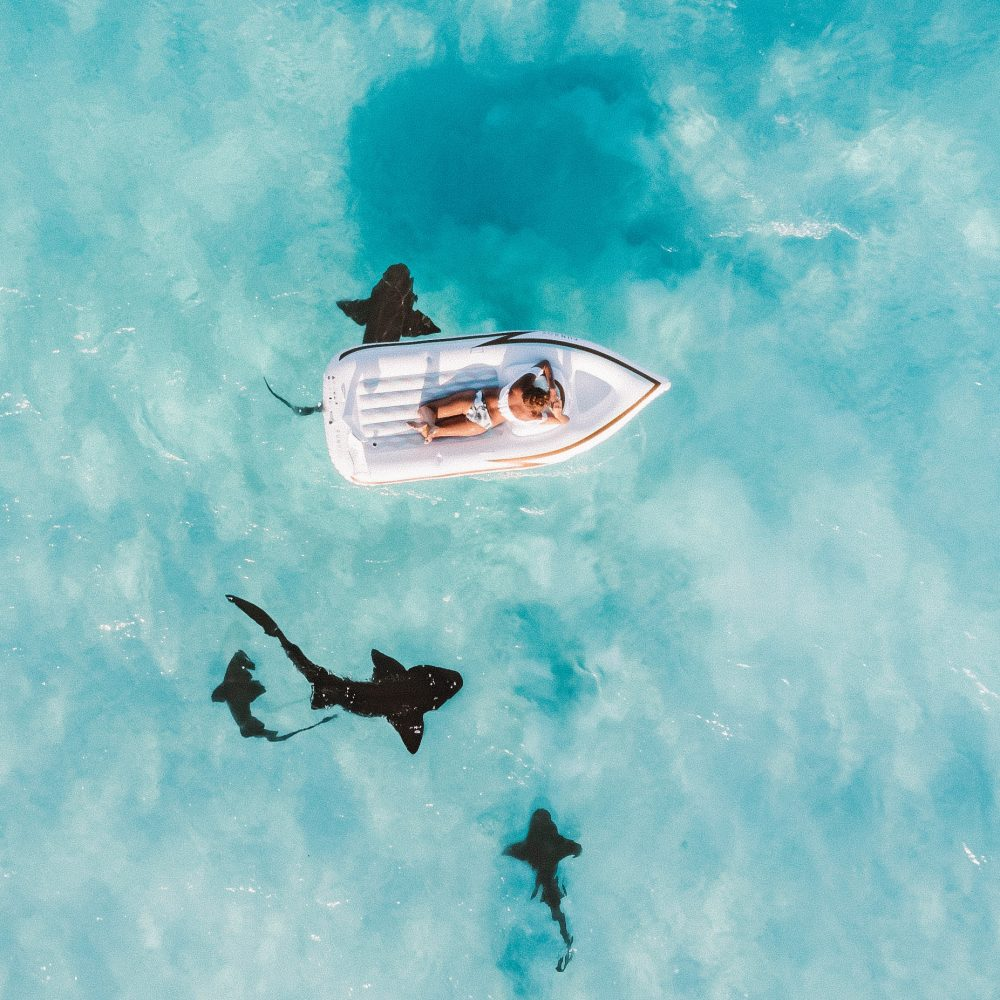 How Diving With Sharks Changed My Life